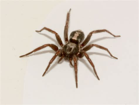 Spiders In spiders pest and extermination services in toronto
