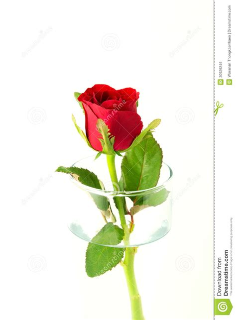 rose in glass red rose in glass royalty free stock image image 30929246