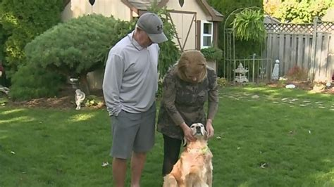 golden retriever rescue ottawa amherstburg applauds golden retriever rescue organization ctv news