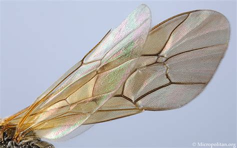 the wings of an insect are attached to this section image gallery
