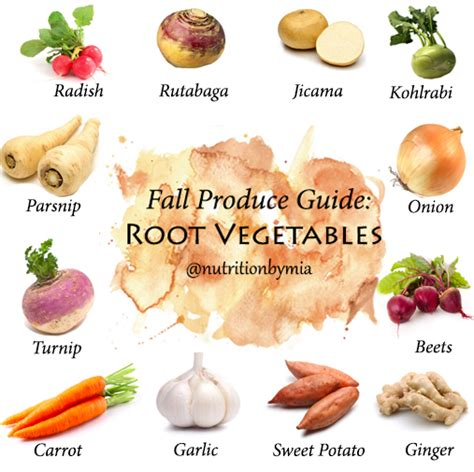 vegetables underground fall produce guide root vegetables nutrition by