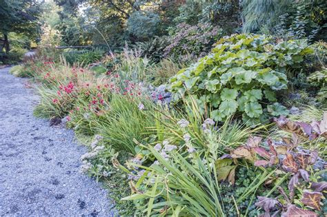 zone 8 gardening tips plants that grow well in zone 8