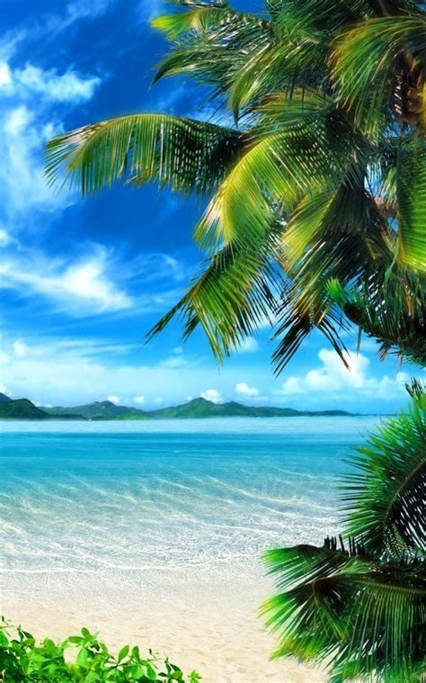 Live Palm Tree Wallpaper by Tropical Live Wallpaper Android Apps On