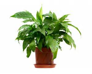 house plants mr kate ask mr kate what are the most difficult