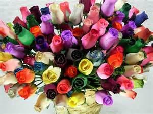 what color of roses fiore rosa caratteristiche della rosa