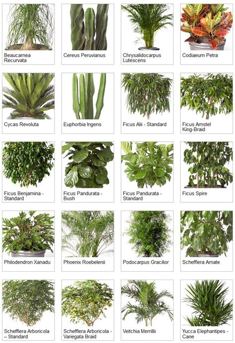 types of tropical house plants indoor palms identification indoor tropical plants
