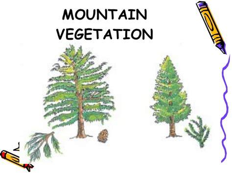 vegetation in india