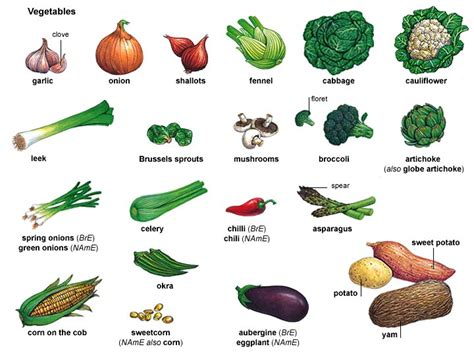 vegetables with english names vegetables names