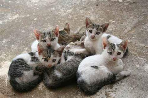 Litter Of Kitties by New Kittens In Litters