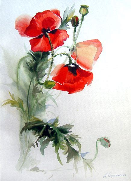 25 best ideas about watercolor poppies on poppies poppies and poppy drawing