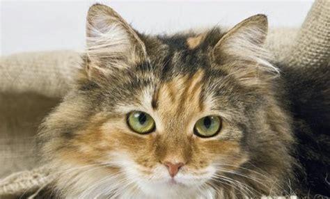kastration bei katzen und bei katern