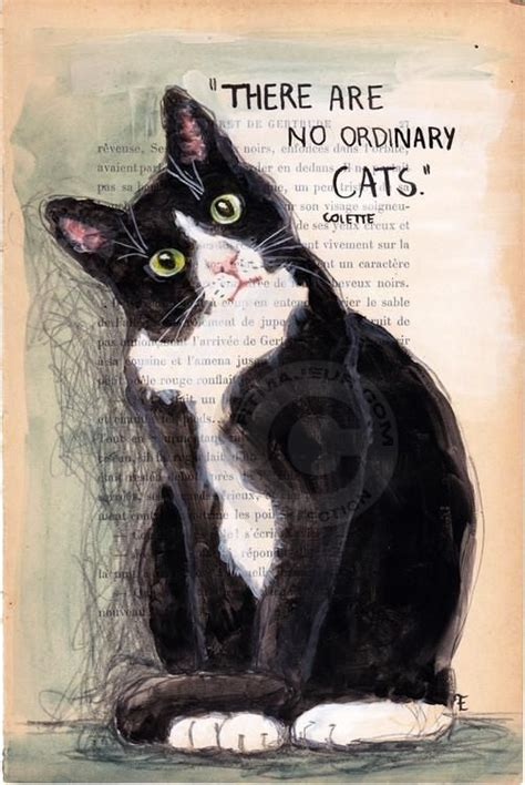 cat haiku sweet verses books the world s catalog of ideas