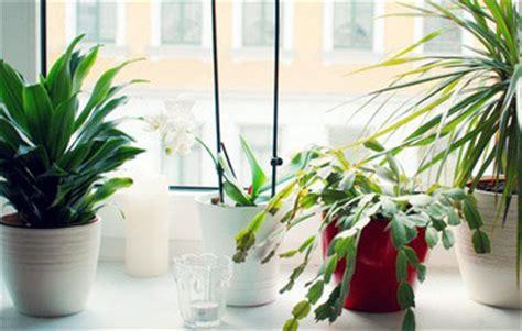 fensterbrett pflanzen gesund wohnen mit pflanzen im kinderzimmer