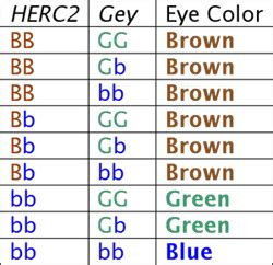 genetic eye color chart understanding genetics