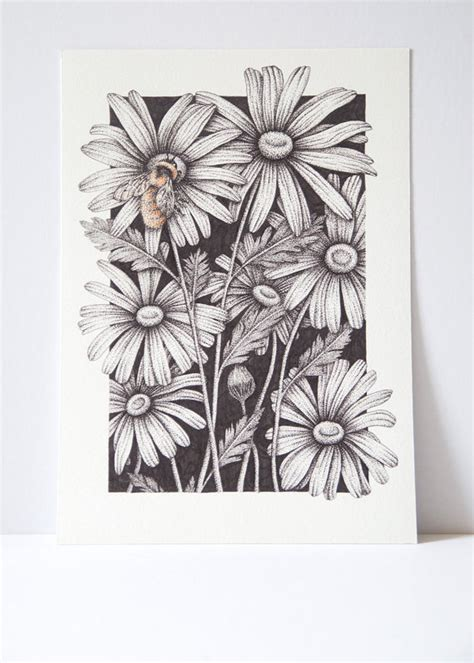 drawn daisy indie flower pencil   color drawn daisy indie flower