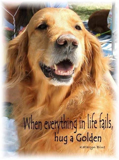 golden retriever quotes best 25 golden retriever quotes ideas on