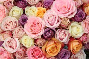 banche albenga accueil signification des fleurs
