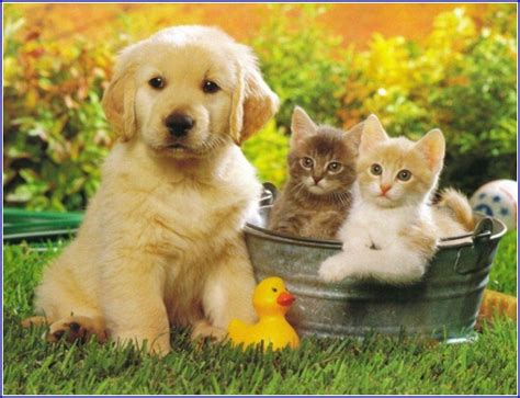 best dogs for cats best breeds for apartments and cats pet photos gallery zl2avpz3wl