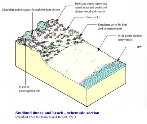sand dune cross section studland south haven peninsula geology by ian west
