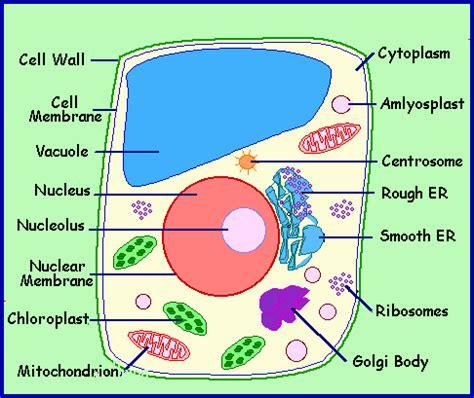 plant cell diagram grade 8 parts of cells organelles mr burns 6th grade science
