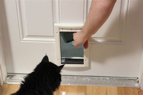 Putting Cat Flap In Glass Door Installing A Cat Door