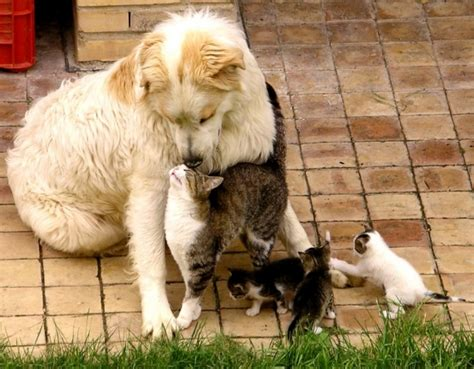 bonding with puppy cats bond with teh
