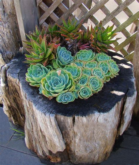 Tree Stump Planter Pot by How To Make Your Tree Stumps Into Amazing Flower Pots