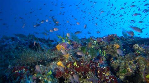 gozo dive gozo diving reqqa point