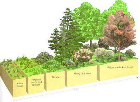 Building Designer Online permaculture design stability permaculture thailand
