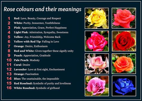 how do flowers get their color beautiful colors and their meanings not that i
