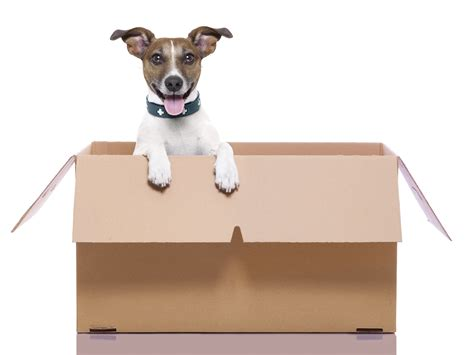 moving house with a dog moving house for a dog noten animals