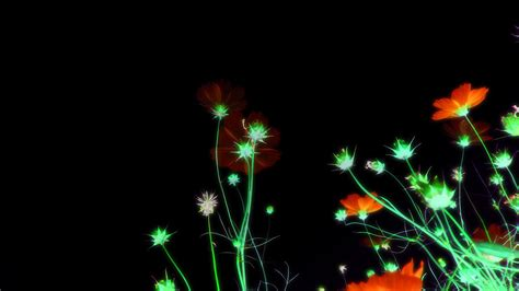 wallpaper flower view night view with flowers hd wallpaper hd latest wallpapers