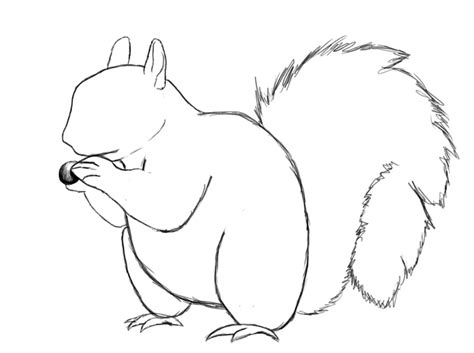 how to a for squirrel how to draw a squirrel draw central