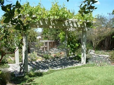 wooden pergola grapevines support hammock backyard escape