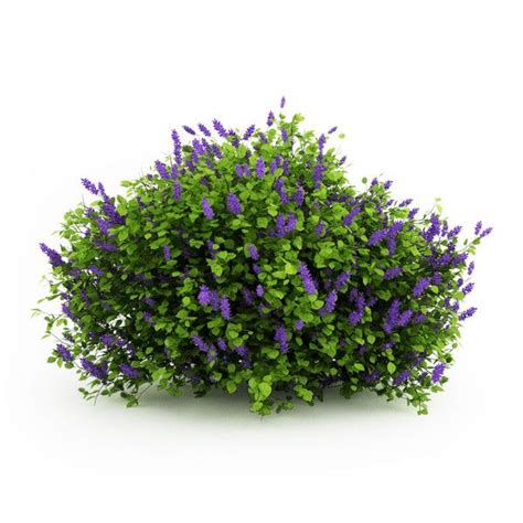flowering trees and shrubs 3d flowering shrubs search ref plant cutouts