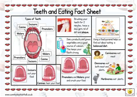 Information About Mat by Teeth And Sided Fact Sheet By Bevevans22 Teaching Resources Tes