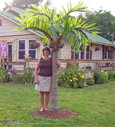 Patio Palm Tree by Patio Tree Patio Design