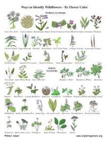 Garden Flowers Identification Wildflower Identification By Color Wildflower Id Book For Wildflowers