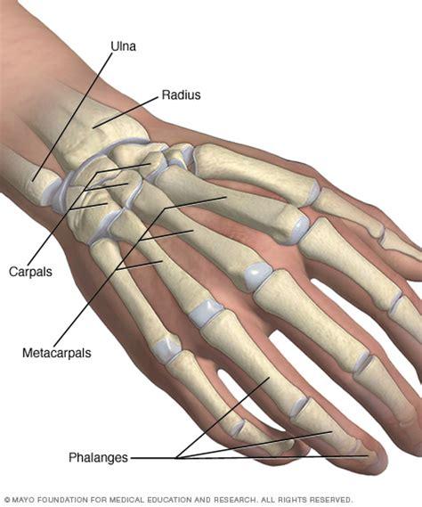 hand and wrist bones mayo clinic