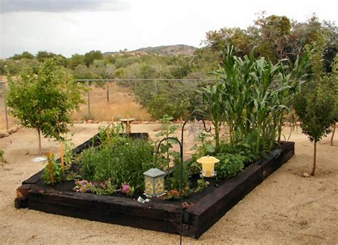Growing A Vegetable Garden In Arizona Ap Nursery Best Location For Vegetable Garden