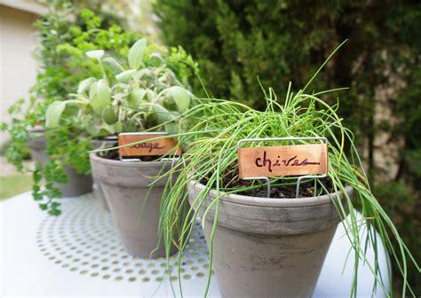 table top herb garden an easy tabletop diy herb garden