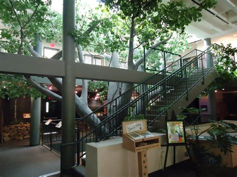 File:Trailside Nature & Science Center Watchung NJ interior view Wikimedia Commons