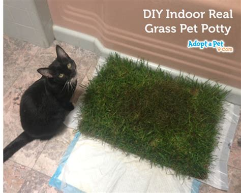 how to toilet a indoors how to make an indoor grass pet potty 187 adoptapet