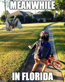 florida memes 15 downright memes you ll only get if you re from