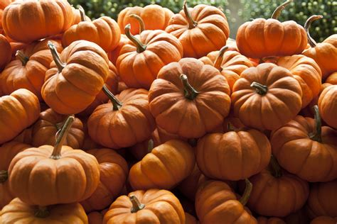 8 impressive health benefits of pumpkin huffpost