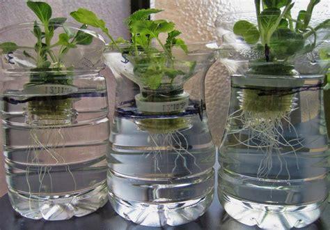 Tips Hidroponik Alat Hidroponik cara menanam hidroponik sayuran tips dan inspirasi