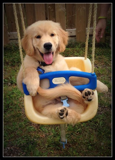 dog in baby swing 17 best images about i will hug you and squeeze you on