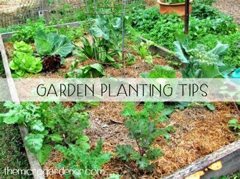 tips and ideas for small gardens garden season cubtab new season garden planting tips the micro gardener