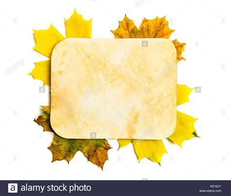 leaf template stock photos leaf template stock images