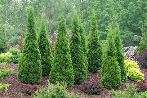 top rated shrubs  easy maintenance landscapes